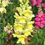 Antirrhinum Majus Semillas enano de las semillas de flor de color Snap Multi Común Jardín Inicio Bonsai Plantas en maceta Plantar 120 piezas de 12