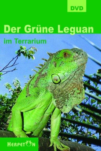 DVD Der Grüne Leguan im Terrarium Köhler/Dreutler