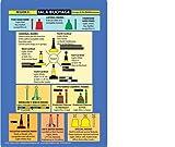 IALA Buoyage: Buoyage and Distress Signals (Cockpit Cards)