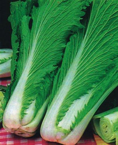 JustSeed - Gemüse - Pak Choi - Wong Bok - 700 Samen