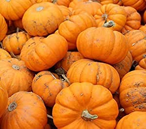 SeeKay Pumpkin Baby Bear - 10 seeds - vegetable