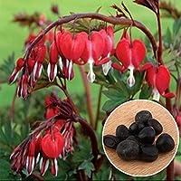 Rosepoem 10Pcs perenne cuore sanguinante semi decidua pianta perenne hardy erba Dicentra spectabilis fiore pianta
