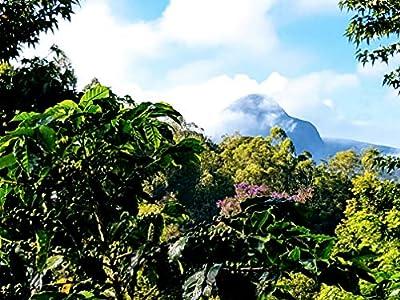 Brazilian Organic Green Coffee Beans | 100% Specialty Microlot Red Catucaí Arabica Variety | Single State Camocim Farm | Demeter Biodynamic Certified from Camocim Biodynamic - Home Roast