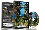Fitness Reisen - Tropische Palmen , für den Innen-Walking, Radfahren und Laufband-Training