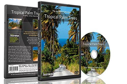 Fitness Reisen - Tropische Palmen für Innen-Walking, Radfahren und Laufband-Training