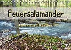 Feuersalamander - Liebenswerte Heimlichtuer (Tischkalender 2020 DIN A5 quer)