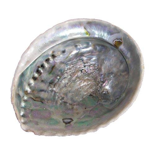 Räuchermuschel - Räucherschale - Meerohrschnecke - Abalone Muschel - wunsch-lounge Dekoration (1...