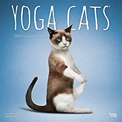 Yoga Cats - Joga-Katzen 2020 - 18-Monatskalender: Original BrownTrout-Kalender [Mehrsprachig] [Kalender]