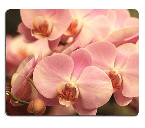 luxlady-mousepads-falene-orchidea-phalaenopsis-con-vaso-con-fiori-colore-viola-con-fiori-gialli-arte