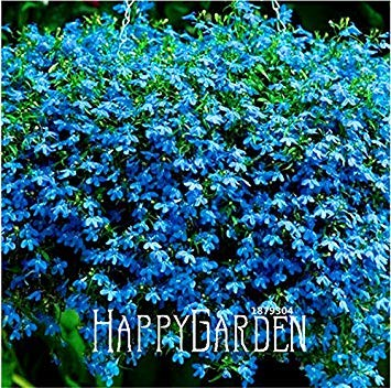 Fash Lady 100 Samen viel großer Verkauf!Lobelia Samen, Blaue Teppich EASY GROW Samen für DIY hausgarten dekoration Blumensamen