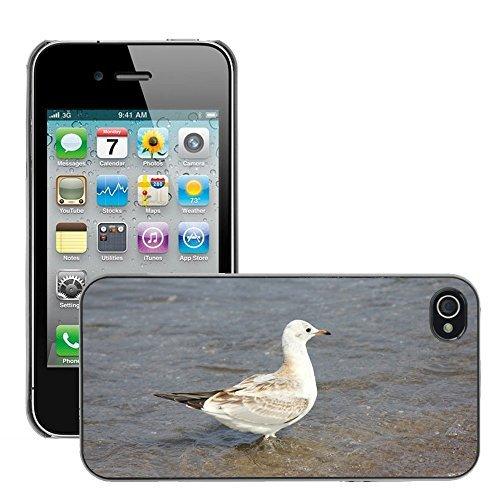 Preisvergleich Produktbild hello-mobile Bild Hart Handy Schwarz Schutz Case Cover Schale Etui // M00137438 Möwe Wasser Ostsee Wasservogel // Apple iPhone 4 4S 4G