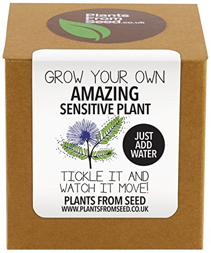plants-from-seed-grow-your-own-sensitive-plant-kit