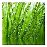 Vliestapete–Morning Dew–Wandbild quadratisch