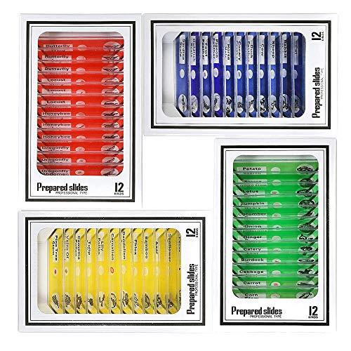 Niños Microscopio Preparado Diapositivas