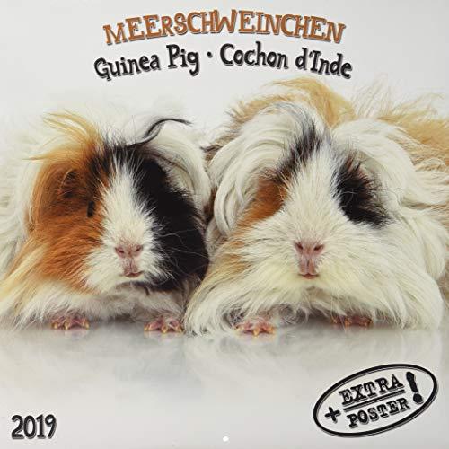 Guinea Pigs/Meerschweinchen 2019: Kalender 2019 (Artwork Edition)