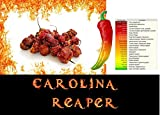 10g piment carolina reaper le plus fort du monde
