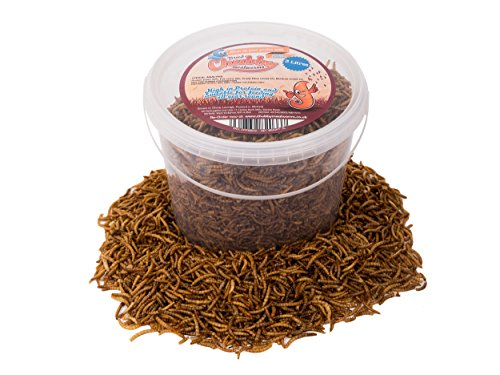 3-litres-chubby-dried-mealworms-with-free-delivery-for-wild-birds