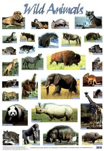 Wild Animals (Laminated posters)