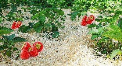 Gartenholzwolle Erdbeerholzwolle Holzwolle für Landwirtschaft 3kg