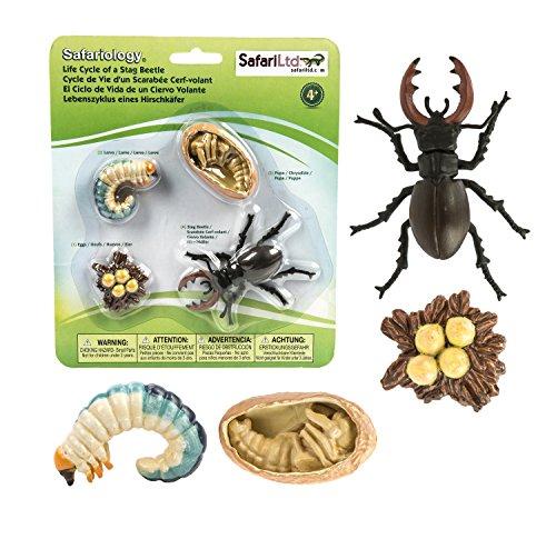 scarabee-cerf-volant-figurines-du-cycle-de-vie