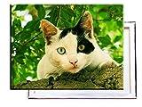 Katze mit 2 Augenfarben - 80x60 cm - Bilder & Kunstdrucke fertig auf Leinwand aufgespannt und in erstklassiger Druckqualität