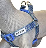 Paxleys Hundegeschirr, verstellbar, Art-Deco, goldfarben/Blau
