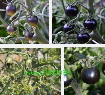 100pcs / originaux Pack Heirloom tomates Semences, graines de légumes de café lumineuse plante bricolage maison jardin