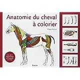 Anatomie du cheval à colorier : Une aide à l'apprentissage de l'anatomie du cheval