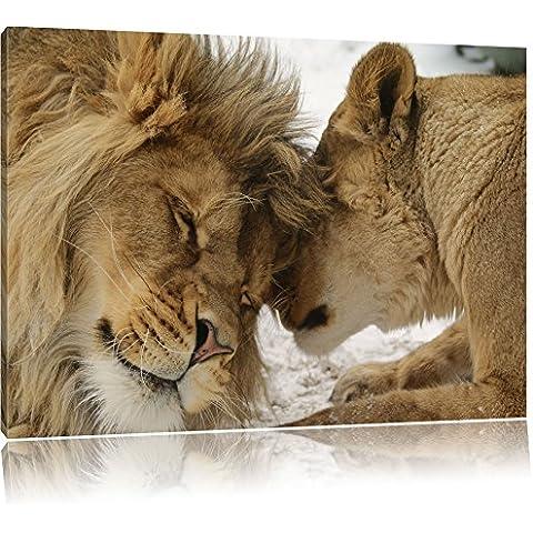 Pintura Kuschelnde león sobre lienzo, Retratos XXL totalmente enmarcadas con marcos grandes cuña, cuadro de la pared de impresión del arte con el marco, más barato que la pintura o una pintura al óleo, no un cartel o pancarta, Leinwand Format:120x80