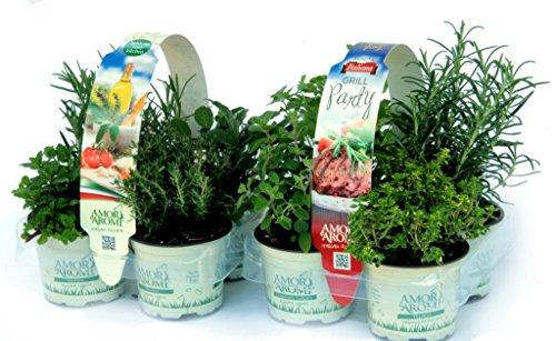 piante aromatiche mix + grill (in vaso Ø 9 cm) n.4 x 2 pack