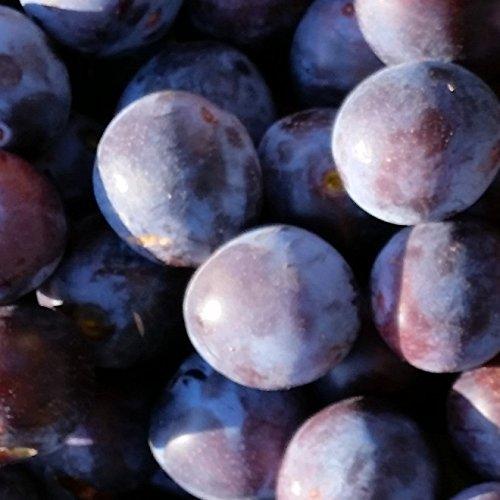 NEU! Pflaumenbaum Artländer Zuckerpflaume, Buschbaum 120-150 cm 10 Liter Topf Unterlage St. Julien A