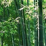 VISTARIC 2: 20 Stück Brunnen weinend Kirschbaum, DIY Hausgärten Zwerge Baum, Zierpflanze Bonsai Sakura-Baum-Samen für zu Hause 2