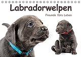 Labradorwelpen - Freunde fürs Leben (Tischkalender 2019 DIN A5 quer): Ein Hundekalender, der Hundeliebhabern das ganze Jahr über Freude bereitet (Monatskalender, 14 Seiten ) (CALVENDO Tiere)