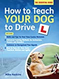 How to Teach your Dog to Drive