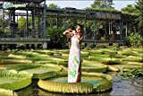Portal Cool Victoria Amazonica 5 Semi Semi Originali Lotus Ninfea