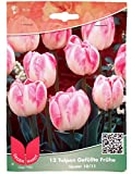 Tulpen Gefüllte Frühe Upstar - 12 Stück