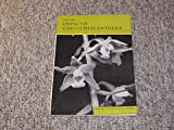 Epipactis und Cephalanthera. Orchideen Mitteleuropas. 5. Teil.