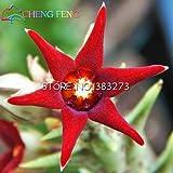 100pcs Stapelia Seeds Fünf Lithops Mix Sukkulenten Samen Seltene Frische Bonsaipflanzen für Haus und Garten Blumentöpfe Pflanz freies Schiff