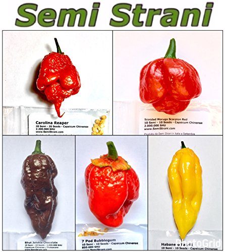 50 GRAINES PURE de les PIMENT CHILI LES PLUS PIQUANT, SAVOUREUX et BONNES DU MONDE, LA COLLECTION 5 BIS: CAROLINA REAPER, TRINIDAD MORUGA SCORPION RED, BHUT JOLOKIA - GHOST CHILI CHOCOLATE, 7 POD BUBBLEGUM, FATALII - LES FRUITS NE SONT PAS INCLUSES