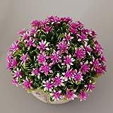 Fenteer Künstliche Gypsophila Bonsai Pflanzen im Topf Kunstpflanze Dekopflanzen Topfpflanzen - Lila - 3