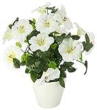Flair Flower Petunienbusch Im Topf