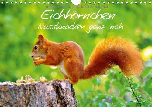 Eichhörnchen-Nussknacker ganz nah (Wandkalender 2014 DIN A4 quer): Putzige Nager immer auf Futtersuche (Monatskalender, 14 Seiten)
