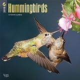 Hummingbirds - Kolibris 2018 - 18-Monatskalender: Original BrownTrout-Kalender [Mehrsprachig] [Kalender] (Wall-Kalender)