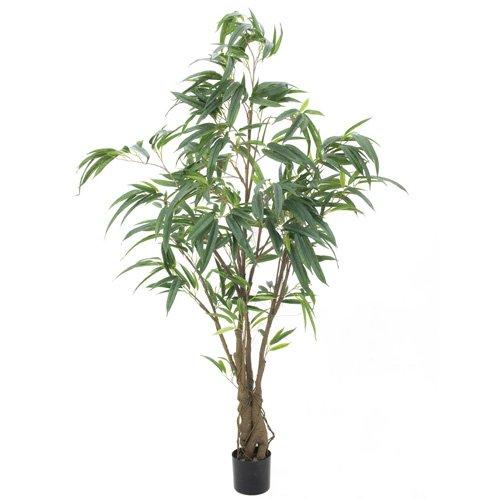 Euro Palms 82506316 Ficus Longifolia dickstämmig 180 cm