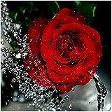 Xshuai Diamant Malerei DIY 5D Voller Diamant Diamant Painting Wird Nicht Verblassen Rose Stickerei Kreuzstich Bilder Kunst Handwerk Dekoration Für Wohnzimmer Schlafzimmer (Rot Rose)