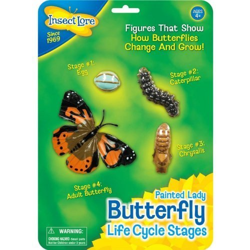 Insect Lore Life Cycle Stages Set: Butterfly by Insect Lore TOY (English Manual)
