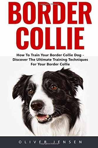 border-collie-how-to-train-your-border-collie-dog-discover-the-ultimate-training-techniques-for-your