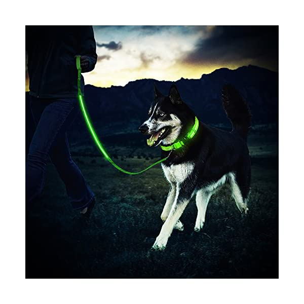 ZeWoo-USB-Rechargeable-LED-Dog-Safety-Collar-LED-Dog-LeadLeash-Great-Visibility-Improved-Safety