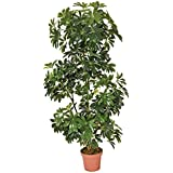 Planta artificial cheflera 145 cm altura, Catral 74010005