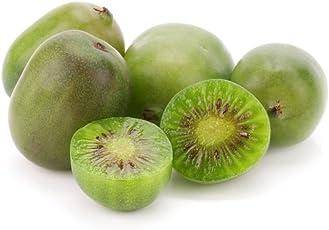 Rarität Kiwibeere Mini Kiwi Actinidia arguta Issai selbstfruchtend Winterhart